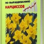 Бизнес-план по выращиванию нарциссов / Павел Шешко, А. Бруйло / 2011