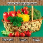 Семейство пасленовых. Технология выращивания / Панкратова А. / 2008