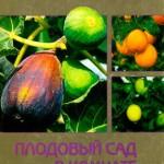 Плодовый сад в комнате  / Блейз О. С. / 2002