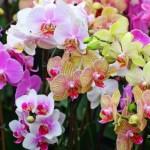 Выращивание орхидей: советы для начинающих
