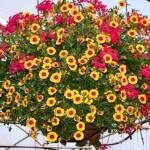Как украсить сад ампельными растениями