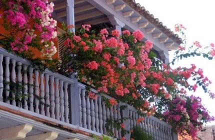 комнатные ампельные цветы фото и названия