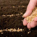 Советы для хорошего урожая