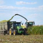 Царица полей кукуруза. История и современность