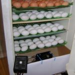 Как сделать инкубатор из холодильника и из коробки