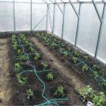 Система подземного полива огорода своими руками