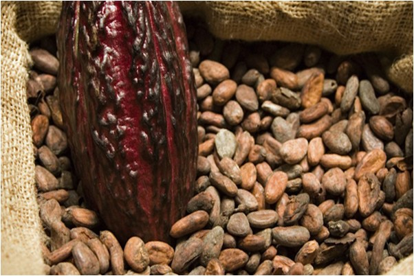 Какао какао