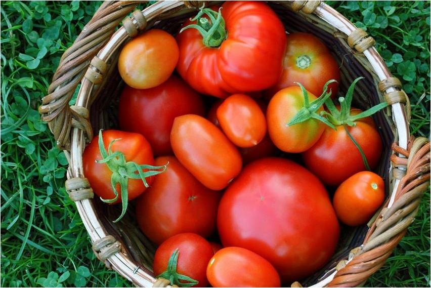 Томат томат